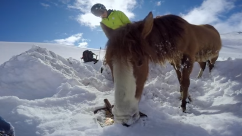 Chilean snowboarders save horse stranded in the snow