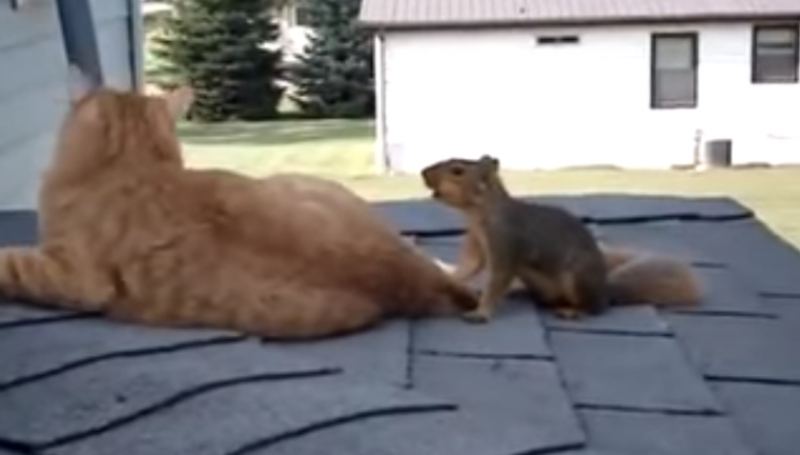 Strange best friends on the roof