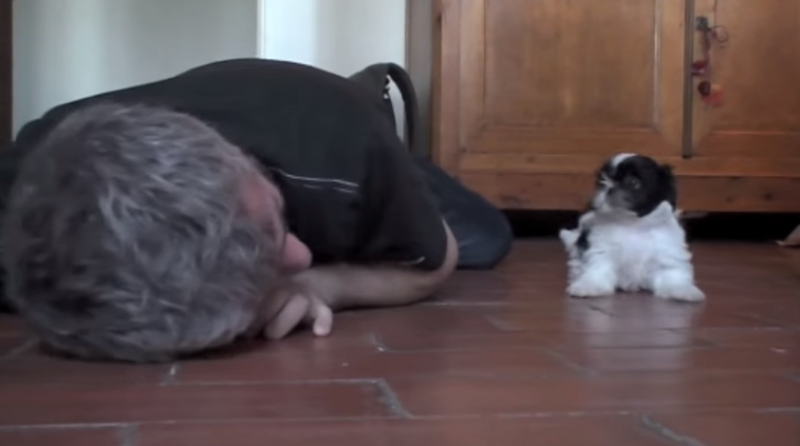 Shih-Tzu and owner frolic around adorably