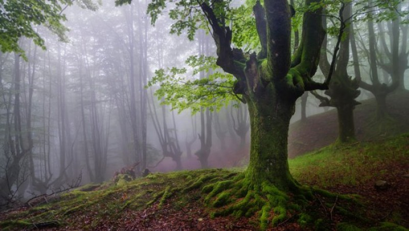 The magical forest of Spain