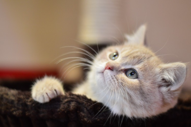 Did you know? Interesting facts about cats