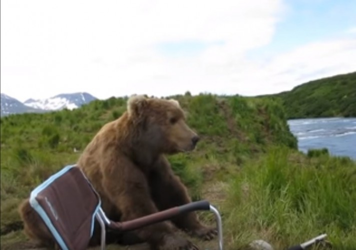 Close encounter with a brown bear