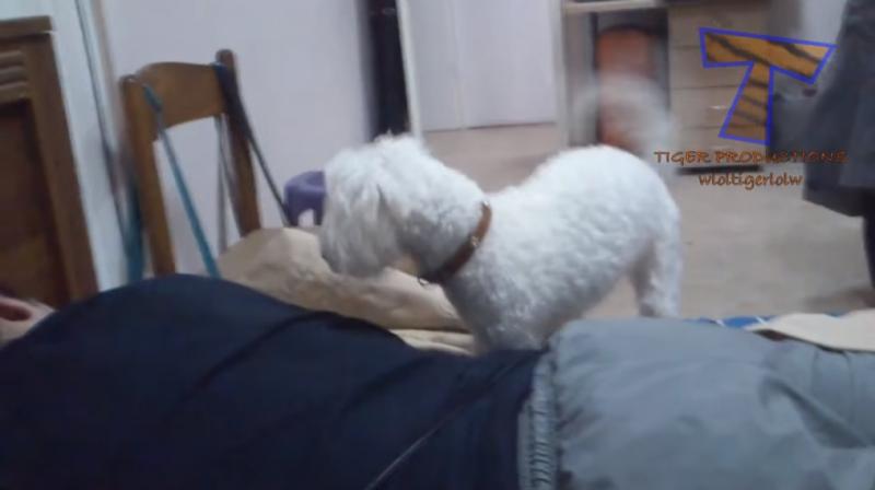 Cute dogs for alarm clocks